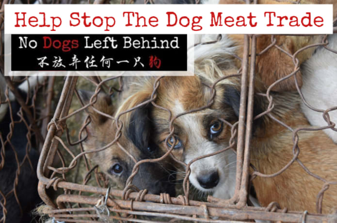 Yulin Dog Meat Festival 2020.Help Stop The Dog Meat Trade Indiegogo