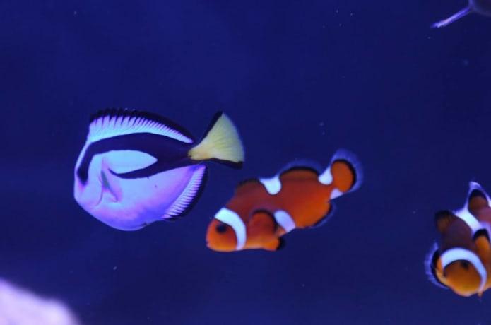 Dokdo Tank: The Smart All-In-One Aquarium | Indiegogo