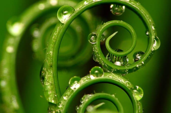 Vibrant Vital Water, Technologies That Revitalize! | Indiegogo
