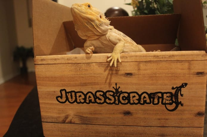 Image result for jurassicrate best pet subscription box