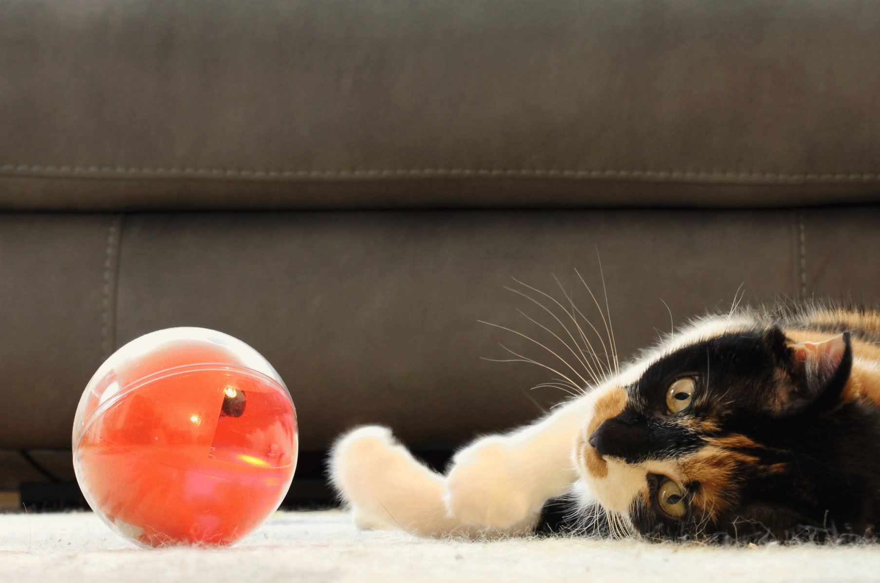 PlayDate: World's First Pet Camera in a Smart Ball | Indiegogo